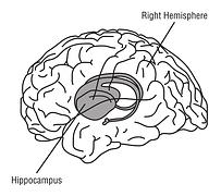 hippocampus-148151__180